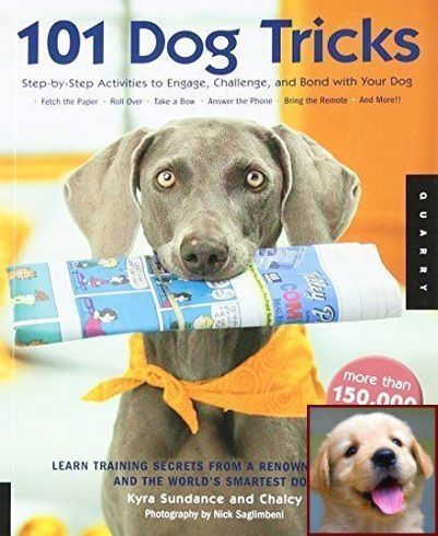 Dog Behavior Research And Dog Training Courses In Kolkata Dog