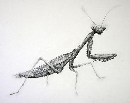 Image Result For Praying Mantis Tattoos And Praying Mantis