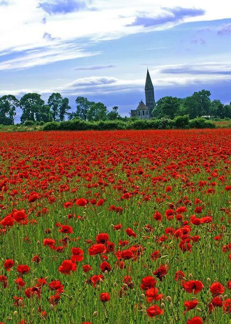 Dorothy worthy, oh so bright and happy. Poppy Fields, South Coast England