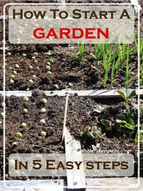 How To Start A Garden In 5 Easy Steps | WholeLifestyleNutrition.com #gardening #organic