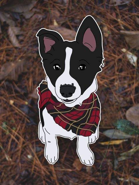 #dog #dogs #bordercollie #collie #puppies #doggo #hugspups #outdoors #dogphotography #river #sony #naturephotography #dogstagram #florida #adventuredog #dogsofinstagram #puppiesofinstagram #petoftheday #colliesofinstagram #bordercollieworld #bestwoof #dogsthatexplore #dogsthathike #dogsinwilderness