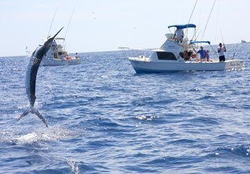 Charter Boat Deep Sea Fishing Marlin Fishing Saltwater Fishing
