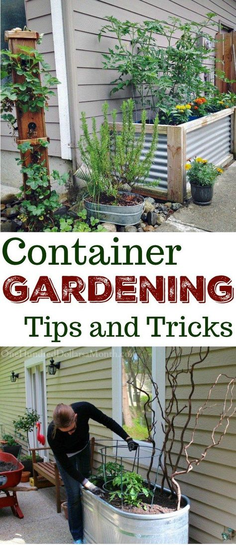 Everything You Need to Know About Container Gardening - One Hundred Dollars a Month - Container Gardening, Container Gardens, Container Garden Ideas, Gardening Source by susyterrell - Indoor Vegetable Gardening, Home Vegetable Garden, Container Gardening Vegetables, Container Plants, Organic Gardening, Gardening For Beginners, Gardening Tips, Gardening Gloves, Gardening Supplies