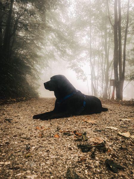 Wandern Mit Hund In Oberosterreich Fazit September 2018