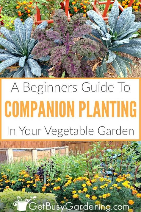 5e2f2555b8764cb31839f3cb89211398 - Companion Planting The Beginner's Guide To Companion Gardening