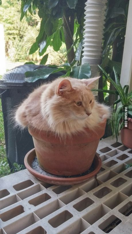 59 Cats in flowerpots ideas | cats, crazy cats, cats and kittens