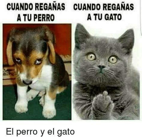 Memes Chistes Humor Funny Invequa Gato Gatos Perro Perros Memes En Espanol Memes De Gatos Funny Animal Memes Funny Animal Pictures Cute Funny Animals