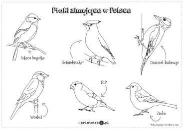 Ptaki Zimujace W Polsce Kolorowanka Printoteka Pl Ptaki