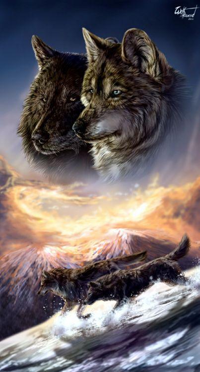 Fonds D Ecran Art Numerique Fonds D Ecran Animaux Loups Par Misss89 Hebus Com Fond D Ecran Chien Fond D Ecran Loup Animaux