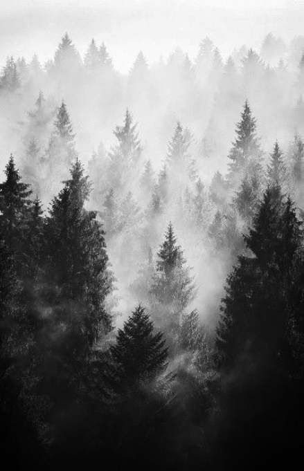 Whether It Is A Simple Artwork Or Dark Portrait Black And White Do Wonders In Terms Landscape Photography Nature Vintage Nature Photography Vintage Landscape