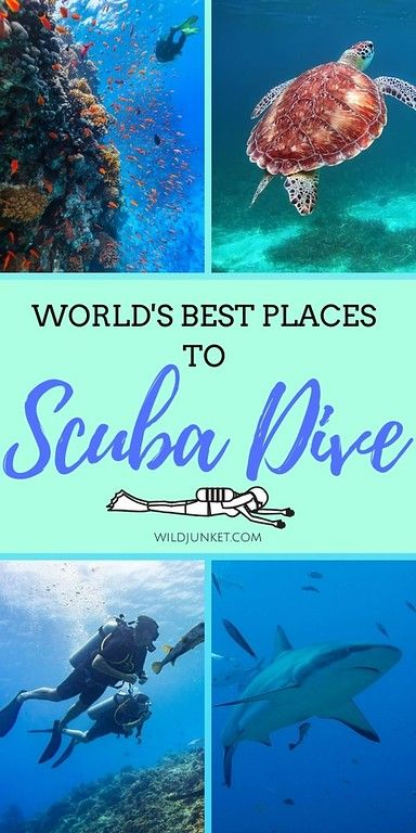 The World's BEST Places to Scuba Dive! From Micronesia to Southeast Asia and beyond, this list is a compilation of the best scuba diving in the world, from an experienced scuba diver. #scubadiving #bestdiving #bestdivesites #scubadivers #divetheworld #scubadivingtrips #bestscubadiving #wheretoscubadive #scuba #scubatravel #divetrip #divingtrips #divingaroundtheworld #galapagosislands