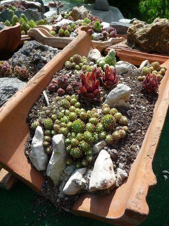 Jardins Miniatures De Joubarbes Garten Deko Europaletten Garten Pflanzen