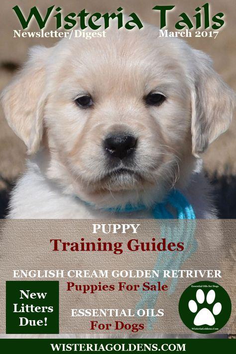 Gradually Switch To Life S Abundance Dog Food English Golden