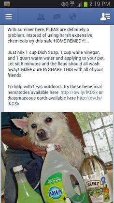 Untitled Flea Bath For Dogs Dog Flea Remedies Flea Shampoo