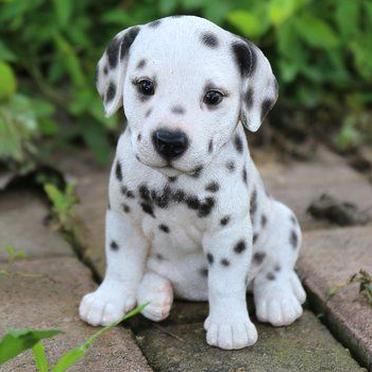 Cute Dogs Breeds, Best Dog Breeds, Cute Dogs And Puppies, Baby Dogs, Puggle Puppies, Maltese Dogs, Baby Animals Pictures, Cute Animal Pictures, Animals And Pets