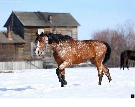 ^^Go to the webpage to read more about horse breeds. Click the link to get more information Viewing the website is worth your time.