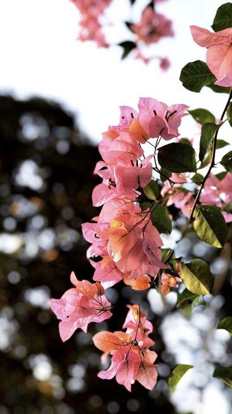 Sun Kissed Blooms