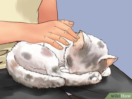 5e73cefbe4d34b3414dd85e24e44d7ed - How To Get A Wild Kitten To Trust You