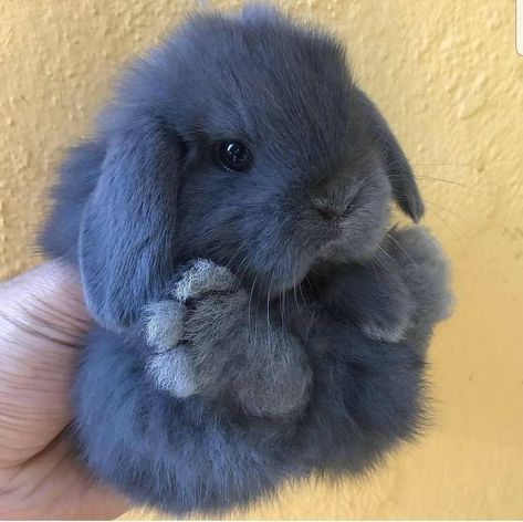 Super Fluffy Floofs Fluffy Animals You are in the right place about Cutest Baby Animals ever Here we Baby Animals Super Cute, Cute Baby Bunnies, Cute Little Animals, Cute Funny Animals, Cute Pets, Cutest Bunnies, Cutest Animals, Small Animals Pets, Baby Farm Animals