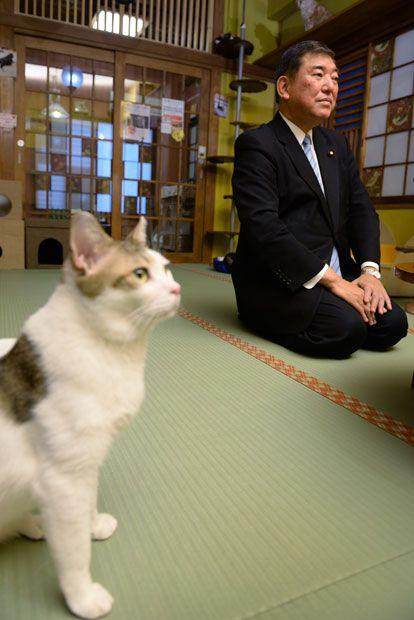 政治家・石破茂の都市伝説「ネコにやたらに愛される」を検証してみた (1/4) 〈AERA〉|AERA dot. (アエラドット) | ネコ, おもしろネコちゃん,  子猫