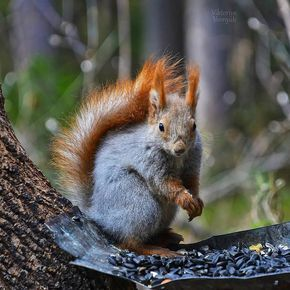 Pin By คนเด มๆๆ คนเด มๆ On กระรอก Cute Animals Animals Animals Wild
