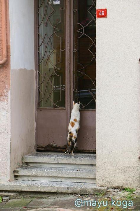 魔女の宅急便のモデルになってても良さそうな街 クズグンジュック ねこ ねこ歩き ペット