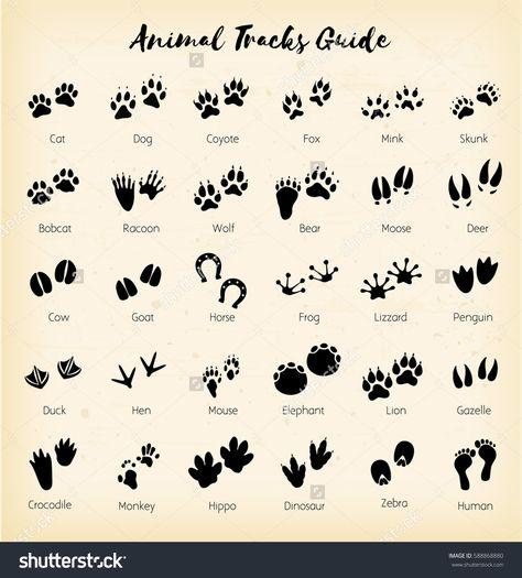 Animal tracks - foot print guide