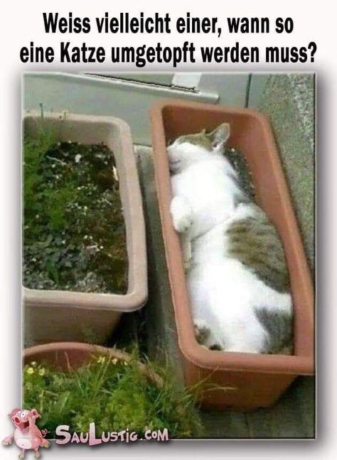 Katzenbilder