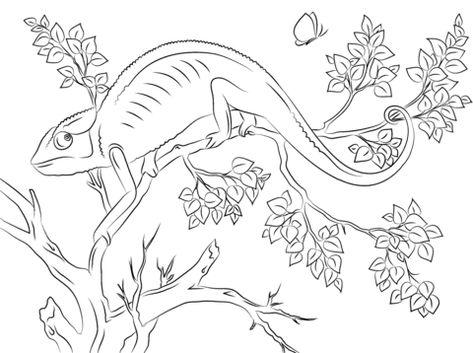 süßes chamäleon ausmalbild (mit bildern)   ausmalbilder