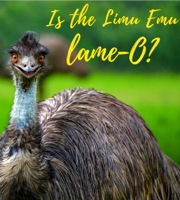 Ad Review Liberty Mutual S Limu Emu Is Lame O The Cranky
