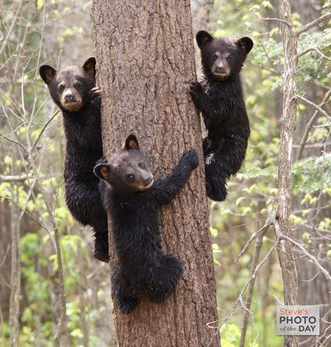 Hey, What ya lookin at?? We  DO climb trees sometimes.... Photo: Louise Merck