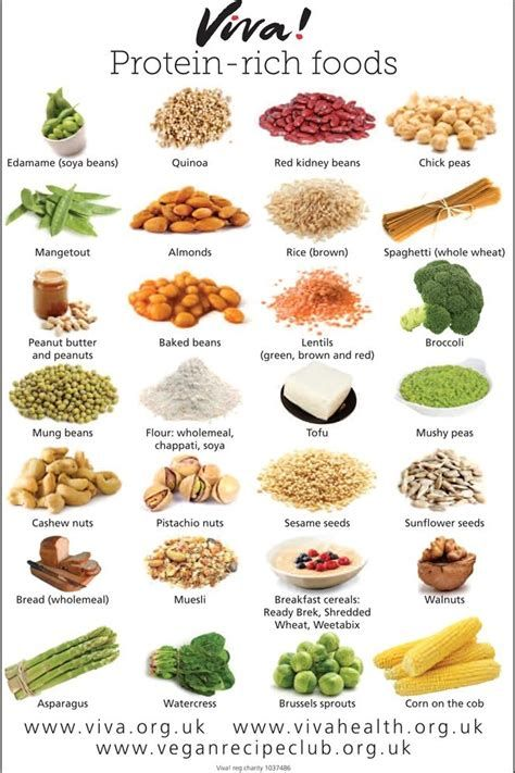 plant and protein diet