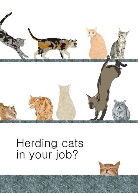 Employee Encouragement Herding Cats Cats Pouncing Sitting Around
