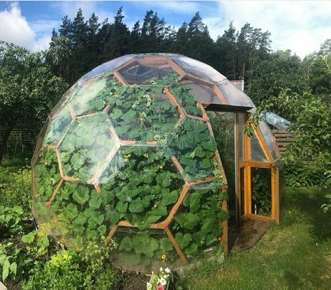 Geodesic Dome Greenhouse, Geodesic Dome Homes, Backyard Greenhouse, Greenhouse Plans, Earthship Home, Genius Loci, Dome House, Glass House, Landscape Architecture