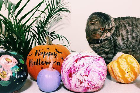 #nocarvepumpkins #pumpkins #cat #scottishfold #howto #halloween