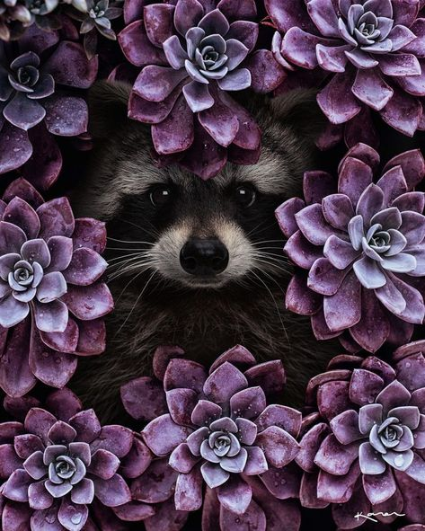 Surreal Animals Photo Manipulations by Karen Cantú Q
