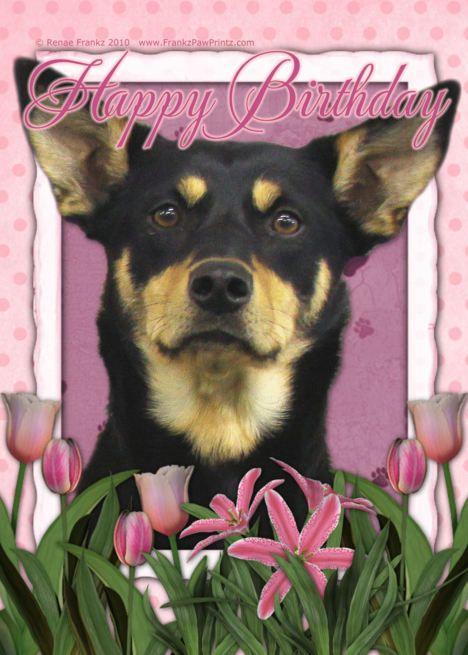 Happy Birthday Australian Kelpie In Pink Tulips Card Ad Sponsored Australian Birthday Hap Birthday Cards For Mother Tulips Card Happy Mothers Day Mom