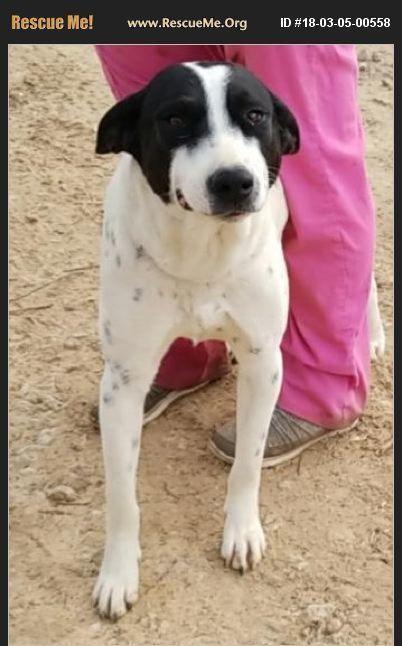 Adopt Keisha On Pets Border Collie Dogs