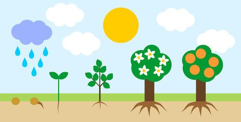 Landscape with life cycle of orange tree. Plant growth stage from seed to  tree with fruits | Tree life cycle, Plant growth chart, Mini drawingsPinterest