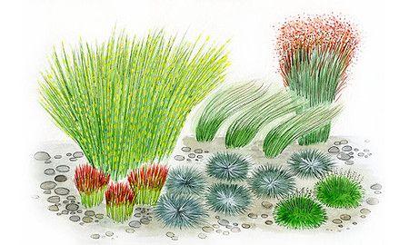 Das Hubsche Graserbeet Gibt Es Im Mein Schoner Garten Shop Graeser Ziergras Meinschoenergarten Pflanzen Kaktus Gras