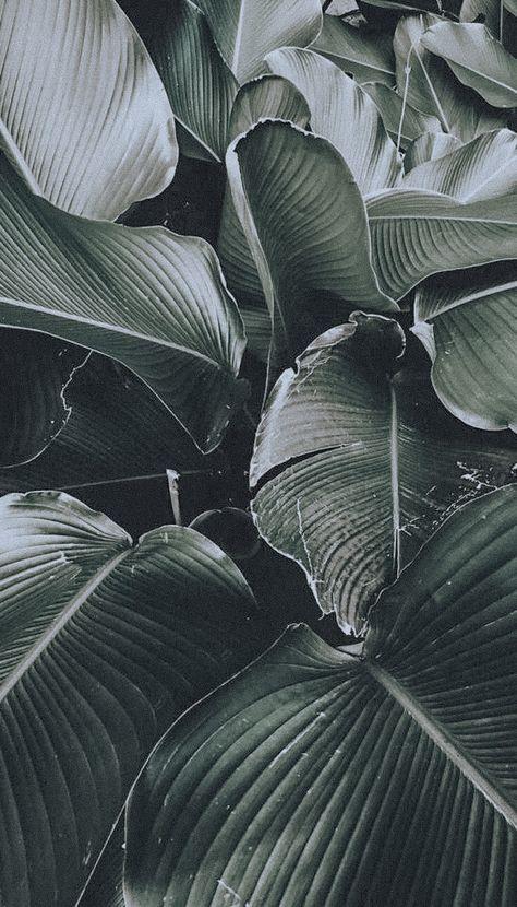 Plant Wallpaper, Tropical Wallpaper, Iphone Background Wallpaper, Iphone Backgrounds, Tumblr Wallpaper, Leaves Wallpaper, Bathroom Wallpaper, Nature Wallpaper, Iphone Wallpapers