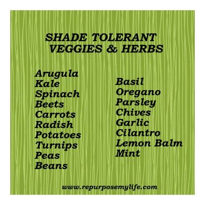 SHADE TOLERANT HERBS AND VEGGIES LIST | In My Garden | Pinterest | Veggies,  Herbs And Gardens