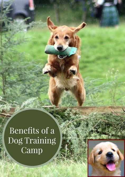 House Training A Puppy In Winter And Dog Training Courses In Dubai