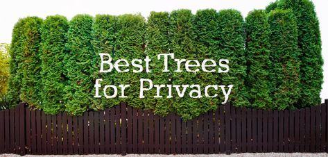The Top 10 Trees For Backyard Privacy Best Trees For Privacy
