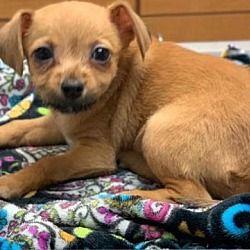 Pet Card Pets Pet Adoption York Terrier