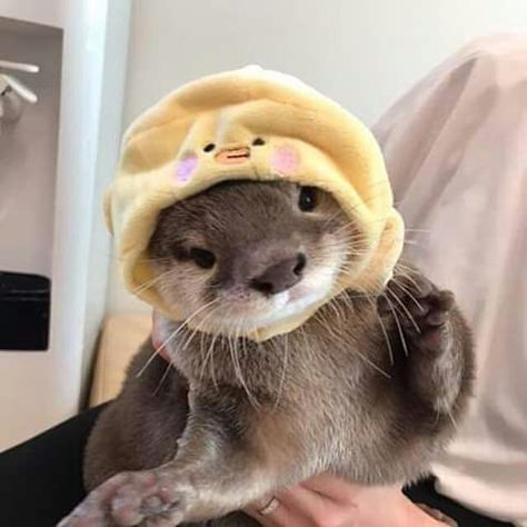 Cute Otter, Otters Cute, Cute Ferrets, Baby Otters, Baby Sloth, Baby Puppies, Cute Puppies, Cute Dogs, Cute Little Animals