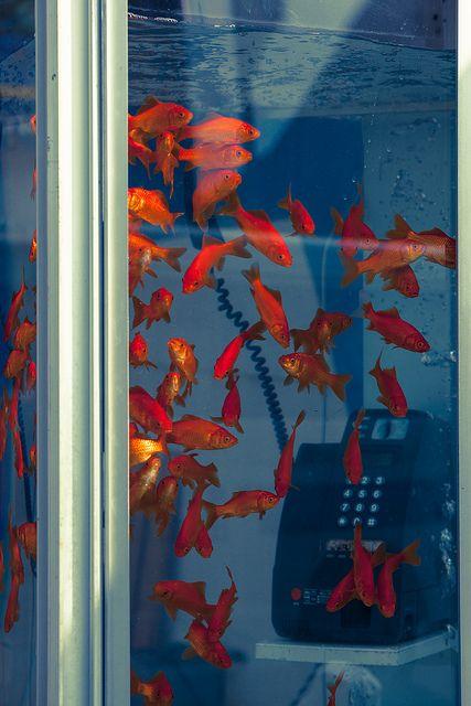 プカプカ浮いてる受話器がお気に入り by Benmont III, Fish/Animal Aesthetic? Aesthetic Images, Aesthetic Photo, Aesthetic Wallpapers, Orange Aesthetic, Retro Aesthetic, Photowall Ideas, Picture Wall, Photo Wall Collage, Goldfish