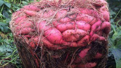 Cendre De Bois Comment L Utiliser Au Jardin Jardin Potager