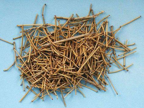 عشبة العلندة فوائد ممكنة وأضرار مفزعة Herbalism Natural Health Herbal Supplements