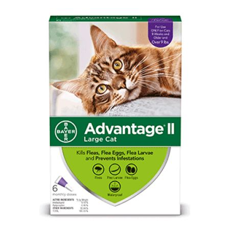 Afflik Advantage Ii Flea Prevention For Large Cats 6 Monthly Treatments Walmart Com Flea Medicine For Cats Tick Treatment For Cats Flea Prevention For Cats
